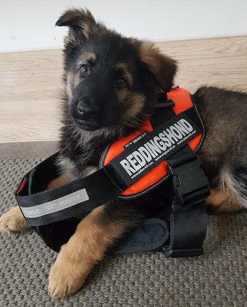Qimugta dagboek pup