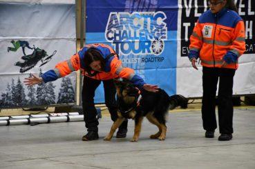 Reddingshond Qimugta tijdens de demo in op de Artic Challenge in Enschede