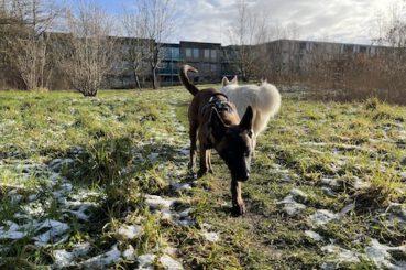 Lexy in de sneeuw
