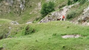 RHWW zoekactie inzet reddingshonden Oostenrijk