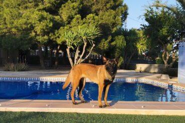 Lexy bij het zwembad